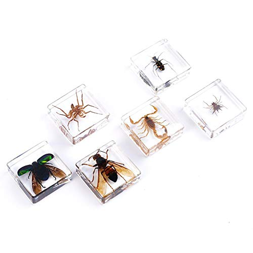 1 pcs Kunstharz-Insekten-Anhänger, Dekoration, künstlicher Bernstein, natürliche Insekten, Bildungswerkzeug, zufällige Farbe