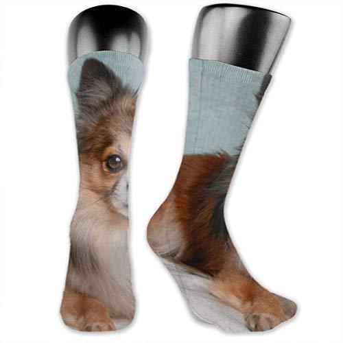 Jesse Tobias Perro marrón y blanco de capa larga acostado en calcetines personalizados con colchón blanco, medias medianas para correr, atletismo, viajes, uso diario