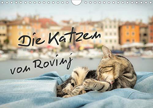 Die Katzen von Rovinj (Wandkalender 2021 DIN A4 quer)