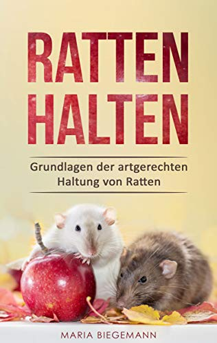 Ratten halten: Grundlagen der artgerechten Haltung von Ratten