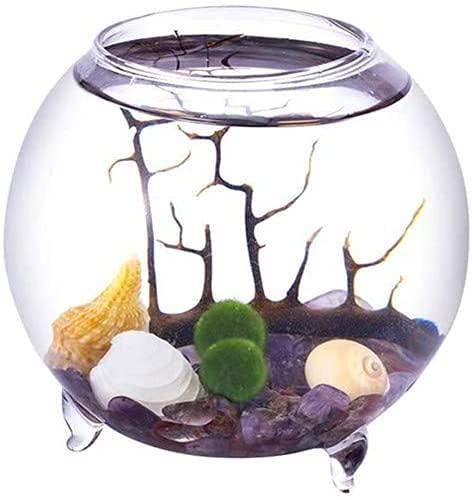 Ecosides Marimo Moosball Terrarium Kit,Geblasenes Aquarium-Set,Kugel Glasvase Container Desktop-Dekoration,mit lebenden Mooskugeln, Kieselsteinen, Muschel und schwarzem Fächer,Koralle,kugelförmig