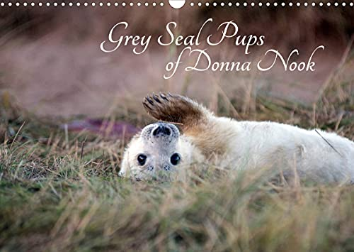 Grey Seal Pups of Donna Nook (Wall Calendar 2022 DIN A3 Landscape)