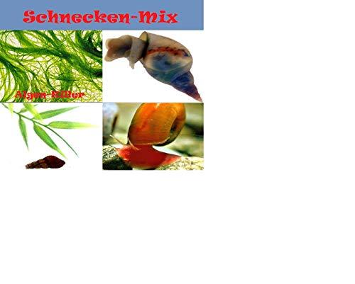 Topbilliger Tiere Schneckenmix 6X - 2X Teufelsschnecken 2X Turmdeckelschnecken 2X rote Posthornschnecken