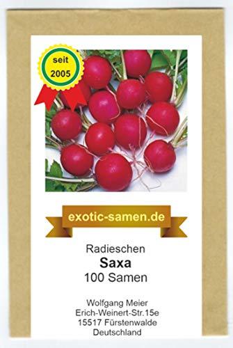Radieschen - Radies -Saxa (100 Samen)