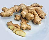 USDA Certified Organic Fresh Ginger Root from...