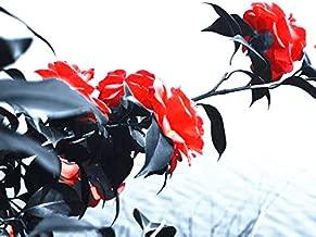 camellia sinensis semillas