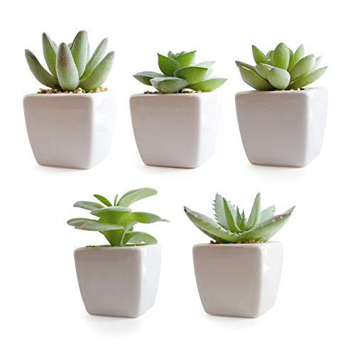Korvea Set of 5 Artificial Succulent Plants in Pots - Assorted Fake Succulents - Mini Succulent Plants - Small Succulent Plants Perfect for Window Sills, Bathrooms, Office Spaces, and More