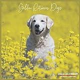 Golden Retriever Dogs Calendar 2022: Official Golden Retriever Dogs Calendar 2022, 16 Month Calendar 2022