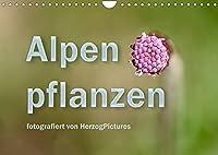 Alpenpflanzen fotografiert von HerzogPictures (Wandkalender 2022 DIN A4 quer): Impressionen von Alpenflanzen ganz nah (Monatskalender, 14 Seiten )