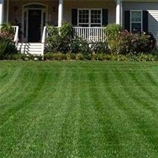 Outsidepride Combat Extreme Turf Type Fescue & Kentucky Bluegrass Grass Seed for Northern Zone - 5 LB