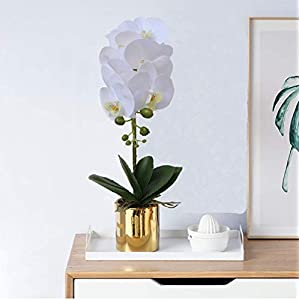 GXLMII Artificial Orchid Flowers Lifelike Real Touch Arrangement Phalaenopsis Bonsai Orchid Miniascape Home Decoration