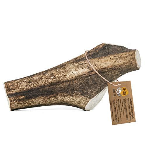 RF - DEER Bois de Cerf   Taille L   Jouets à mâcher naturels pour Chiens   Mâcher des os pour Le Plaisir et Les Soins dentaires   Version Hard