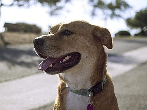 Perro mascota Animal Doméstico de Mamíferos Amigo Retrato Rompecabezas para Adultos 1000 Pieza,Madera Rompecabezas de la Familia de que el Juego de la Colección de Juego Educativo de Arte para la Par