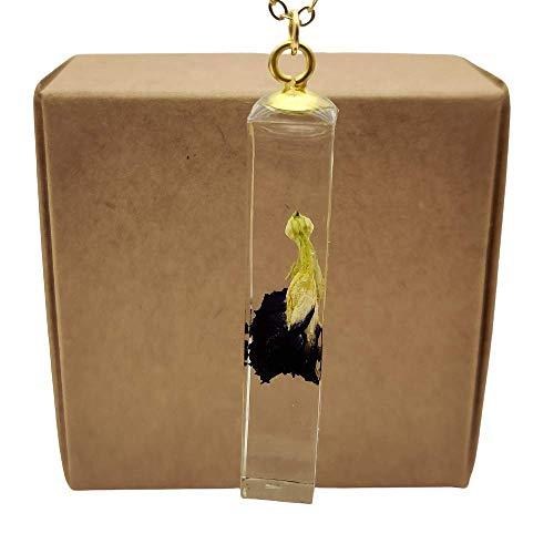 Mariposa Guisante Real Flores Clitoria Ternatea Transparente Cubo Resina Colgante 18k Chapado en Oro Cadena Collares