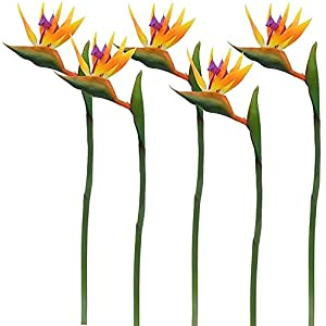 CQQNBKLS 32-inch Real Bird of Paradise Artificial Flower Bouquet for Home Garden Decoration/Wedding Party Decoration Orange (Packing Quantity: 5) (Color : Package Quantity: 5 Stems Blue) Grain and Glo