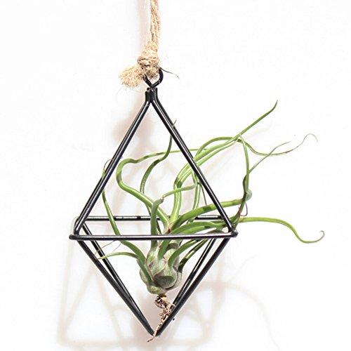 Soporte para plantas de aire de Tillandsia con forma de mariposa, metal geométrico de hierro, rústico, para macetas, macetas, para jardín o casa