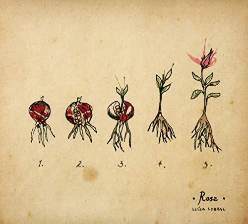 Rosa [Vinilo]