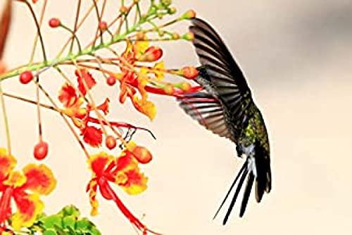 HJHJHJ 500 Pieza Rompecabezas para Adultos Frutas Silvestres y colibríes Rompecabezas de Madera 500 Pieza para Adultos 52x38cm