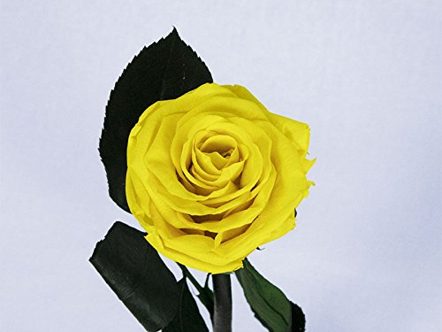 Floréate Rosa eterna preservada Amarilla de 25 cm