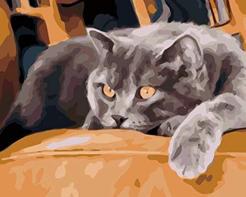 Pintar por Numeros Sofá gato gris Adultos Niños para DIY Pintura por con Pinceles y Pinturas Decoraciones para el Hogar sin Marco de 40x50 cm