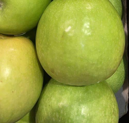 1st. Weißer Klarapfel kräftig gewachsen im großen Topf 120-150cm + Dünger Malus domestica Apfelbaum Obstbaum Apfel Baum Obst
