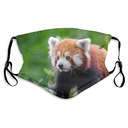 Tuch Gesicht Ma_sk mit 2 Luftfiltern, entzückende rote Panda-Tier-Karnivor, waschbar, wiederverwendbar, staubdicht, winddicht, Tuch Sturmhaube, Schal, Bandanas für Outdoor-Aktivitäten