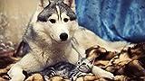 punto de cruz bebe -Lindo perro mascota animal- punto de cruz niñas set punto de cruz tela punto de cruz blanco cuadros de punto de cruz para hacer punto de cruz niños kit