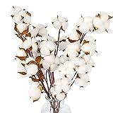 HAKACC - 10 fiori decorativi essiccati con cotone naturale, decorazione per la casa e feste