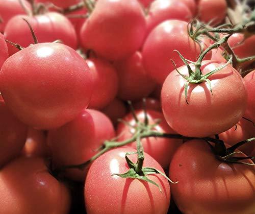 Bobby-Seeds BIO-Tomatensamen Berner Rose, Portion