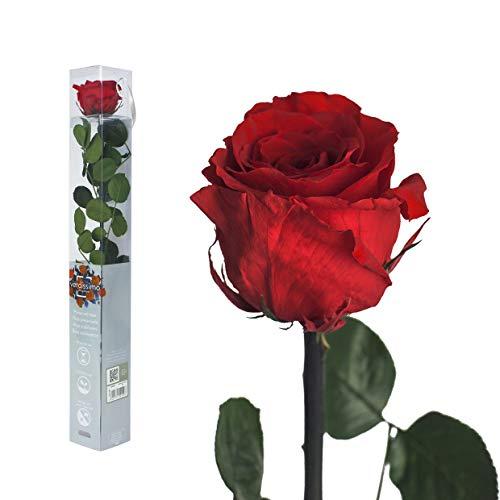 Echte Rose konserviert in verschiedenen Farbenm - preserved, gefriergetrocknete Blumen mit Stiel und Blättern - lange haltbare Schnittblumen in Geschenkbox, beste Deko
