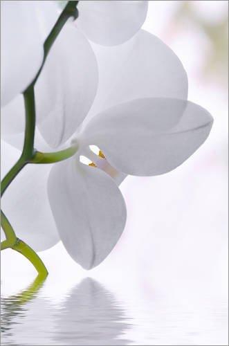 Posterlounge Acrylglasbild 60 x 90 cm: Orchidee von Atteloi - Wandbild, Acryl Glasbild, Druck auf Acryl Glas Bild