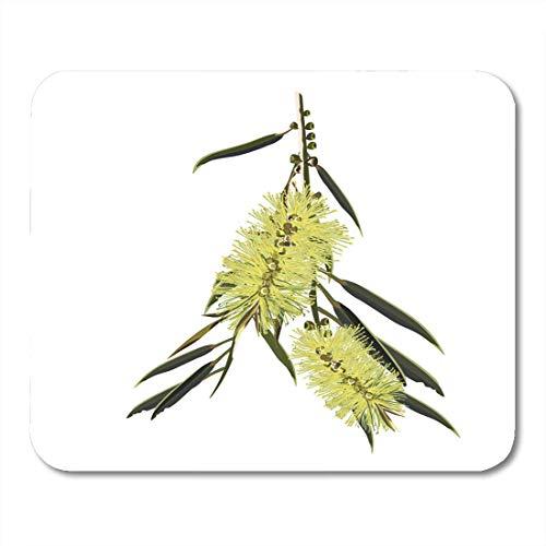 Mauspads Pinsel Grün Blume Des Gelben Australischen Flaschenbürstenbaums Rot Einheimische Pflanze Mauspad Für Notebooks, Desktop-Computer Mausmatten, Büromaterial