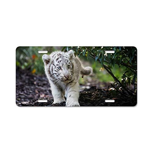 wanshangcheng Animal White Tiger Cub Cute Blue Eyes Baby 4 Holes Alumina Black License Plate Frame