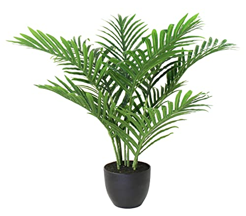 Arnusa -   Künstliche Palme