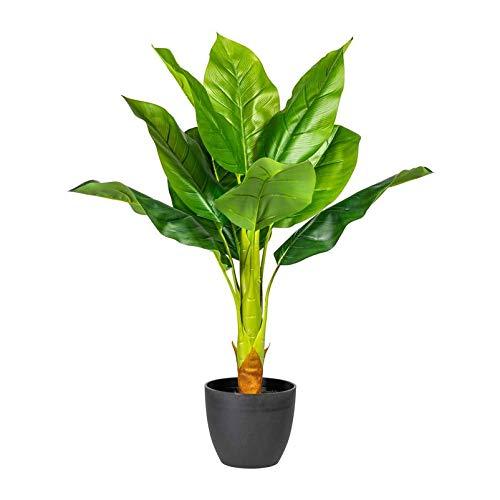 Pflanzen Kölle Bananenpflanze, grün, ca. 70 cm, dekorativ