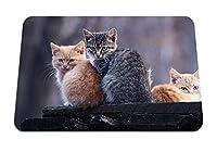 26cmx21cm マウスパッド (子猫スリーダウンステイ) パターンカスタムの マウスパッド