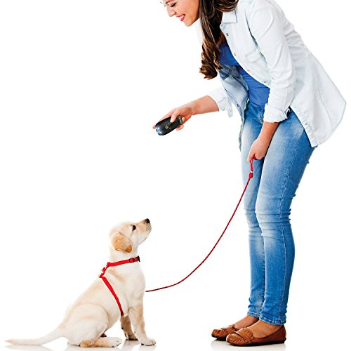 Emsco Gruppe Pet Zoom Command Ultimate Hund Training System