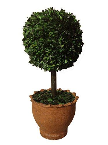 Vintage Home buxushouten bal in aarden pot, geconserveerd, 74 cm