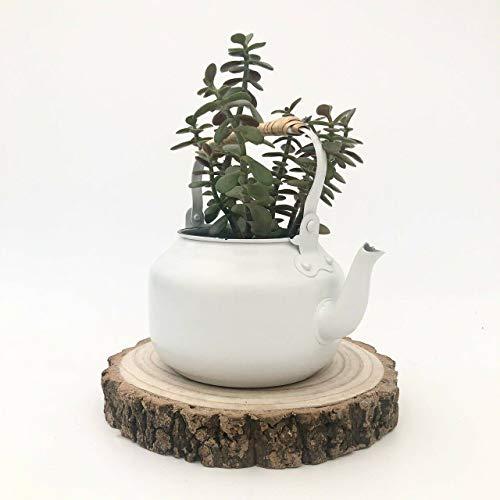 Homes on Trend - Fioriera da tè in stile vintage, in metallo smaltato 10 x 17 cm bianco