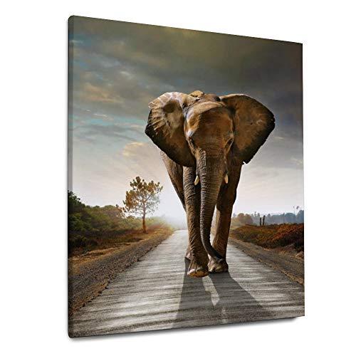 YATELI Impresiones en Lienzo Estiradas y enmarcadas 1 Panel Giclee Fotos para Sala de Estar Baño Moderno Decoración de Pared 20x24 Pulgadas Solo Elefante Caminando
