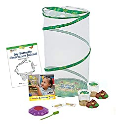 """top 10 butterfly addoy p40 Butterfly Pavilion """"Insects"""": Two cups of live caterpillars with pavilion """"habitat"""" and STEM …"""