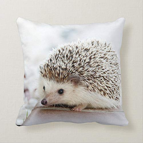 Yilooom 18 X 18 Inch Square Throw Pillow Cases Cushion Covers For Bed Sofa Couch Car Home Decor, Hedgehog Pillow Cover