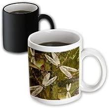 3dRose (mug_31624_3) Dragonflies Graphic Design Dragonflies - Magic Transforming Mug, 11oz