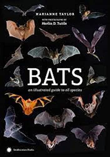 The Bat Illustrated (English Edition)