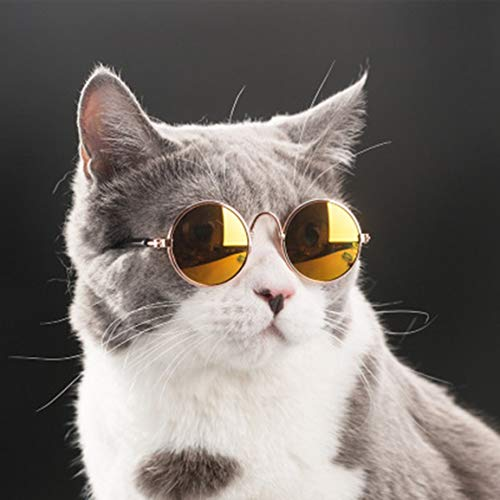 Gafas de Sol para Mascotas Gafas de Sol de Moda Gafas de Gato para Perros de Peluche Accesorios para Mascotas Moda Sombreros Divertidos Gafas para Gatos ➤ HibiscusElla