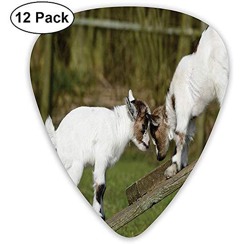 Animal Dos lindos cabritos en un banco con sus cuernos imagen diseño blanco y verde (paquete de 12)