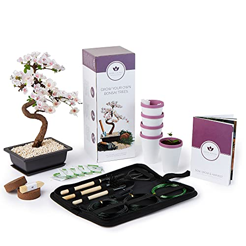 Bonsai Tree Kit with Bonsai Tool Kit - Grow Your own Kits Bonsai Tree Indoor Plant with a Variety of 5 Bonsai Trees Seeds Included and All of The Bonsai Kit Tools You Need