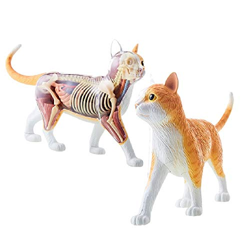 4D Vision Orange Tabby Cat Skeleton & Anatomy Model Kit
