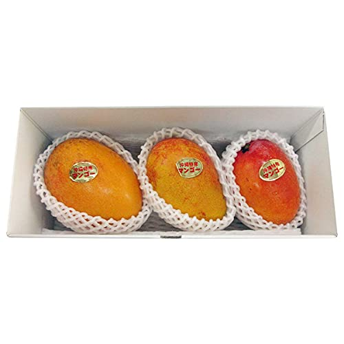 沖縄県産 アップルマンゴー 家庭用 約1kg