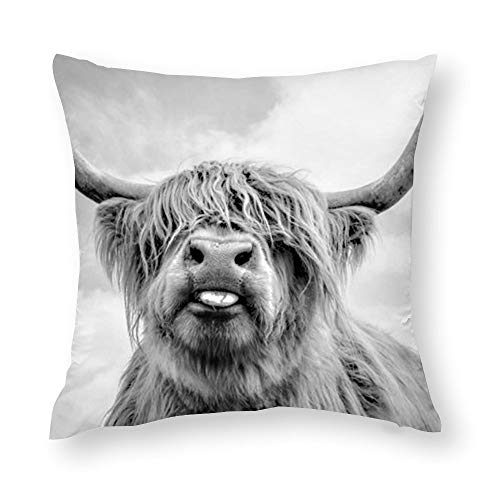 GZLFDTH-LJ Funny Highland Cow Throw Pillow Covers Decorative Protector Cases Home Decoration Zippered Pillowcase Square Cushion Cover for Sofa, Couch, Bed, Car